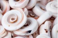 Декоративни черупки миди - опаковка 25 бр.